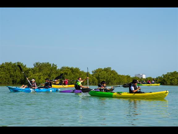 Mangroves Planting and Kayaking, biletino, 365 Adventures - Qatar